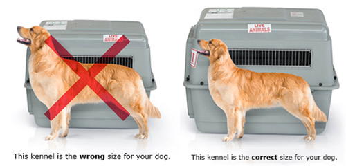 pet-shipping-kennel