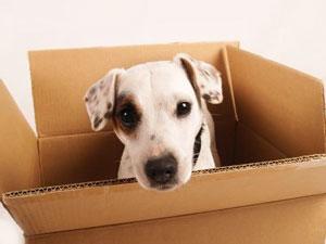 Pet Transport Is Tax Deductible