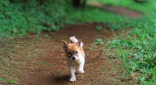 Pet Shipping For Portland and Hawaii - Island Pet Movers