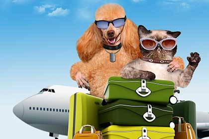 Pet Services - Island Pet Movers